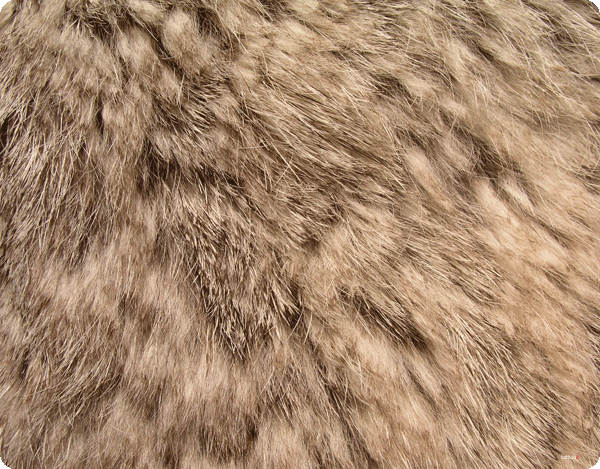 Rabbit Fur