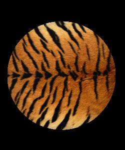Popsocket Tiger Fur, Accesoriu telefon